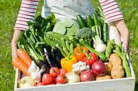 Gardemax - Биоудобрение для высокой урожайности (ГардеМакс)-Ампулы