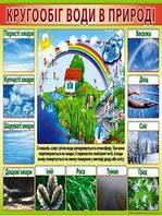 Плакат школьный: Круговорот воды в природе