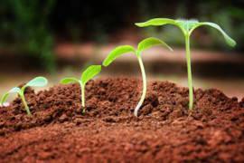 Регулятори росту рослин