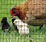 Сітка вольерная для птахів чорна 12х14мм рулон 1м x 50м, фото 6