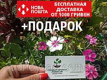 Гвоздика китайская семена (20 шт)