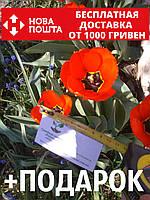 Тюльпан красный ранний луковицы (10 шт), фото 1