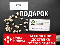 Нут семена (около 100 шт) (Cicer arietinum) турецкий горох, бараний горошек наcіння +подарок