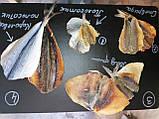 Желтый Полосатик солено- сушеная рыбка  - закуска к пиву (рыбные снеки) 1 кг, фото 3