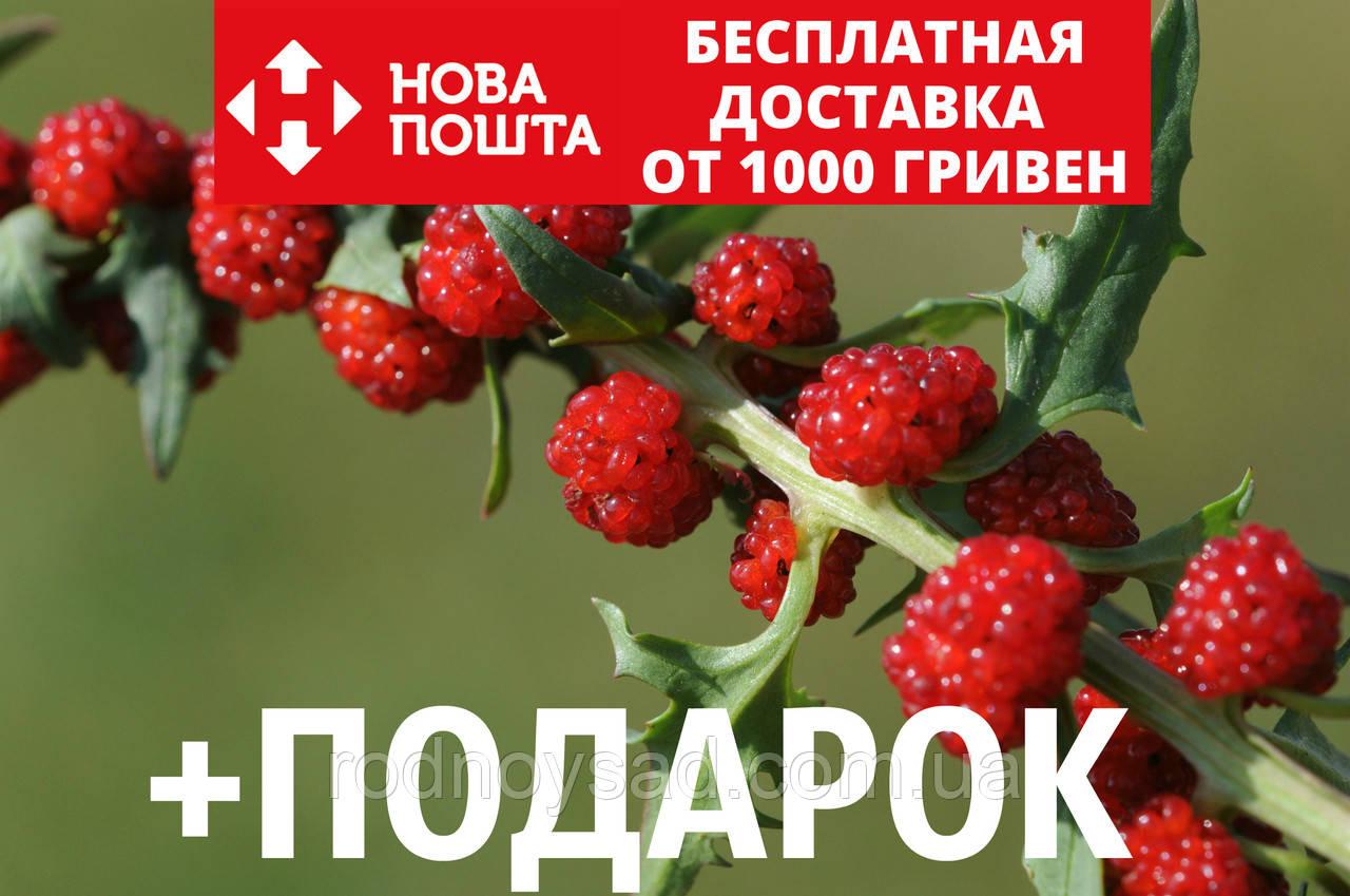 Шпинат земляничный семена (20 шт) шпинат малина, жминда, марь, Blítum virgátum + подарок