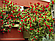 Опоры для подвязки растений или садовых решеток/пергол Ø 8 мм (1,5 метр), фото 3
