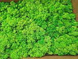 Мох ягель стабілізований зелений  500 г упаковка, фото 5