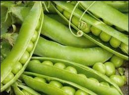 Семена гороха Омега (овощной)
