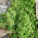 Стабілізований мох (ягель) 500г фасовка, фото 3