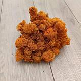 Стабілізований мох (ягель) оранжевий, помаранчевий  500 г, фото 3