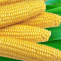 Семена кукурузы Мегатон F1 Harris Moran от 4 000 шт (Проф упаковка 4 000 шт)