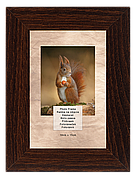 Рамка для фотографий 10х15 см, сосна шоколад