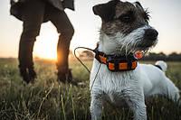 Система слежения Garmin Astro 320 с новым ошейником T5 mini – Специально для маленьких собак