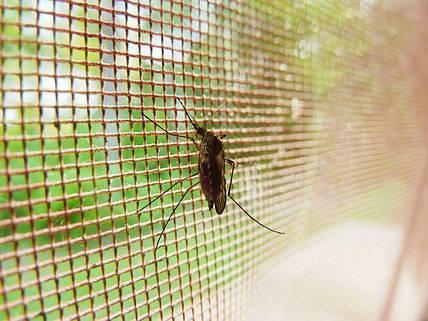 ТОП 7 самых эффективных средств для борьбы с комарами