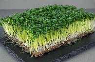 Семена для микрогрин microgreens seeds опт