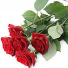 Букет с доставкой 3-101 свежие бордовые розы Кривой Рог, фото 2