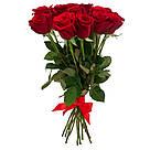 Букет с доставкой 3-101 свежие бордовые розы Кривой Рог, фото 5