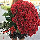 Букет с доставкой 3-101 свежие бордовые розы Кривой Рог, фото 9