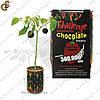 """Шоколадный перчик """"Chocolate Pepper"""" - поливайте и он зацветет"""