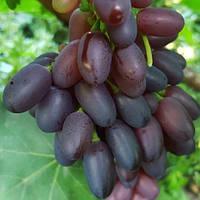 Виноград Найт б'юті