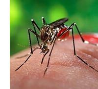 Отпугиватель комаров, фото Sevenmart
