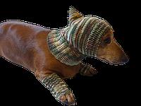 Леггинсы и шапка комплект для собак, леггинсы и шапка для таксы