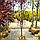 Слива растопыренная 'Писсарди'/ Prunus cerasifera 'Pissardi' / Слива розчепiрена 'Пiссарді', фото 4