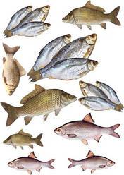 """Вафельна картинка для кондитерських виробів """"Рибалка"""", (лист А4) 5"""