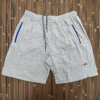 Трикотажные шорты укороченные норма х/б 46-54 светло-серые МТ-140131