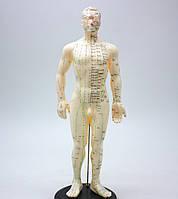 Макет человека мужчины  50см.