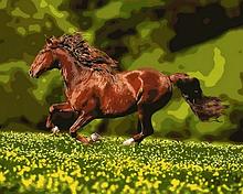 Картина по номерам. «Лошадь на лугу» (GX8814-RA)