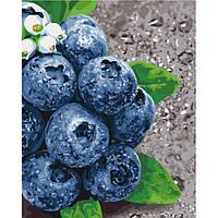 Картина по номерам Сочные плоды ТМ Идейка 40 х 50 см  КНО5581, фото 1