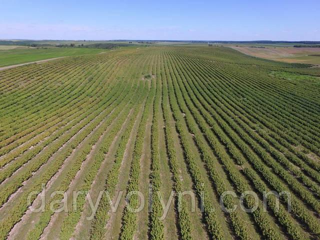 Berrieys fields