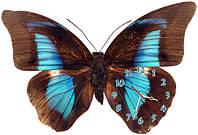 Бабочка - часы настенные фигурные 30*45 см 13