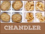 Саженцы грецкого ореха сорт Chandler, фото 9