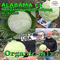 Капуста средне-поздняя АЛАБАМА F1 / ALABAMA F1, 2500 семян, Lark seeds (США)
