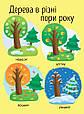 Моя перша енциклопедія : Як виростає дерево? (у), фото 2