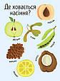 Моя перша енциклопедія : Як виростає дерево? (у), фото 3