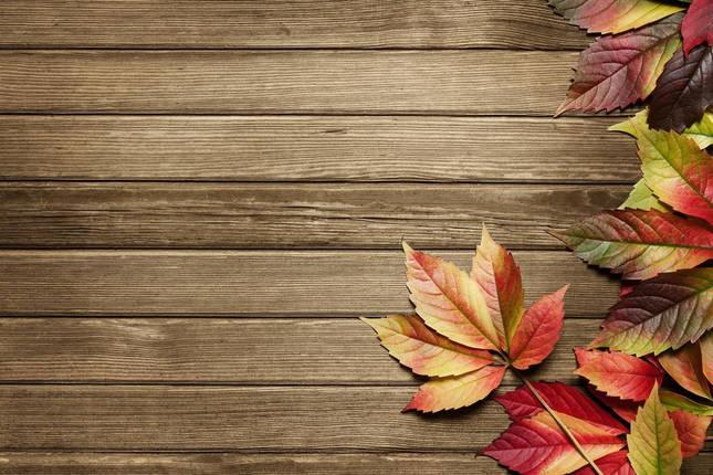 Золотая сень, листья, фото 2
