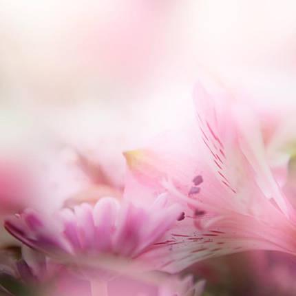 Розовые лилии, фото 2