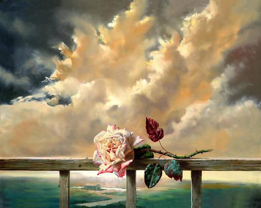 Дикая роза, фото 2