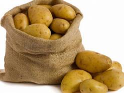 """Картофель домашний сорт """"Словянка"""" мешок 20 кг"""