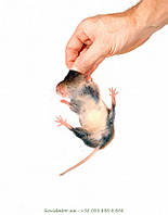 Избавиться от мышей в Запорожье