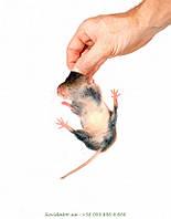 Избавиться от мышей в Виннице