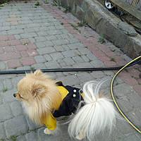 Комбинезон для собак Шарм