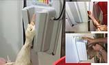 Электрошокер для птицы и кролей, фото 2