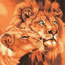 Картина ( раскраска) по номерам ПРЕМИУМ!!! Львиная любовь