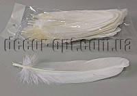 Перья белые 15-20 см 50 шт