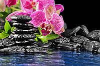 Розовая орхидея камни и вода