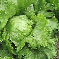 Айсберг Гранди семена салата  (Euroseed, Италия)